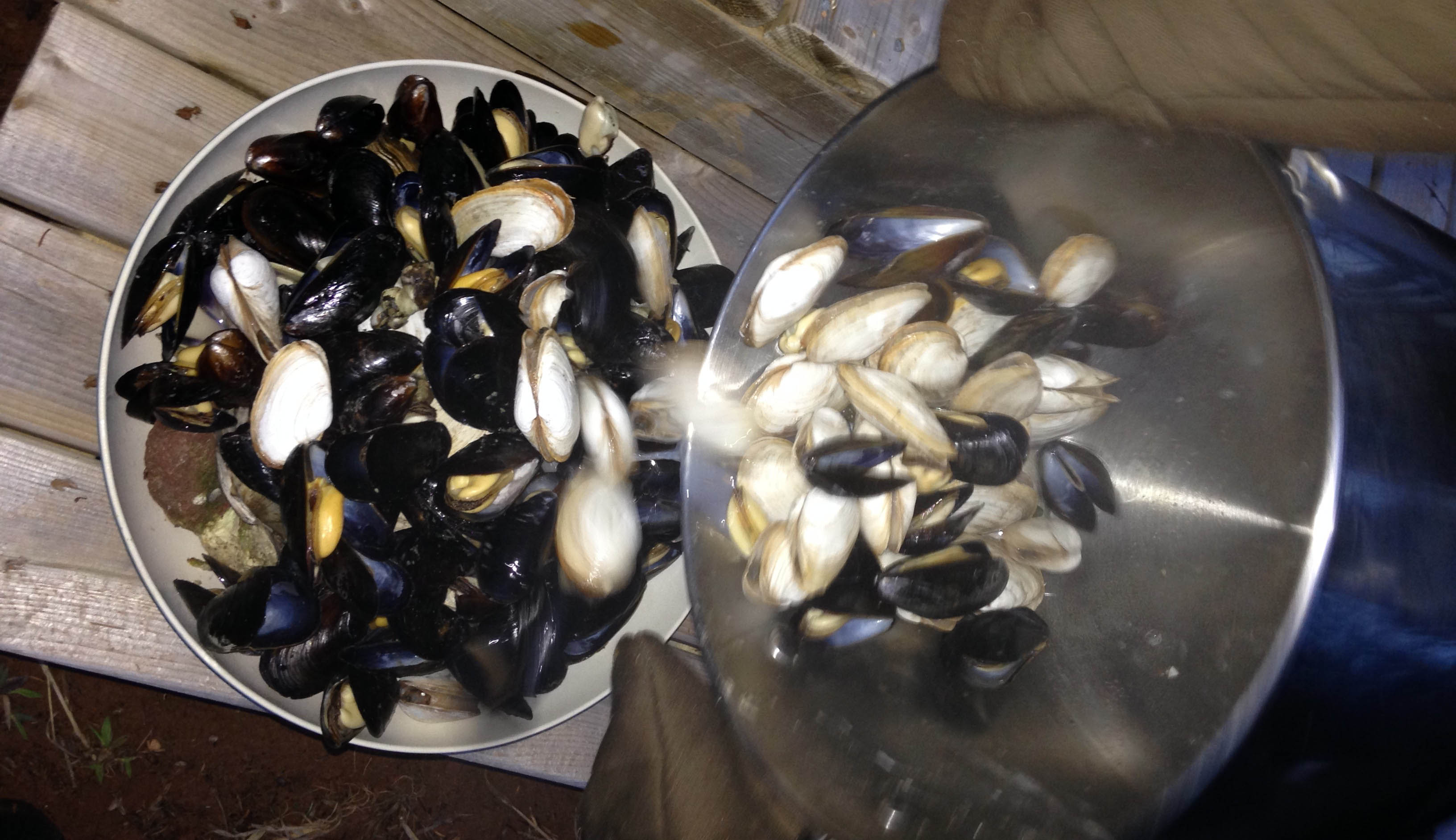 Experience PEI-Beachcomber-clams-mussels